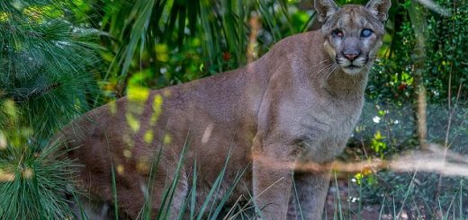 Hobby Farm Boy Sees A Panther